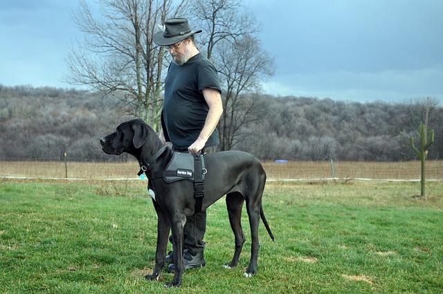 service-dog-1603776_640