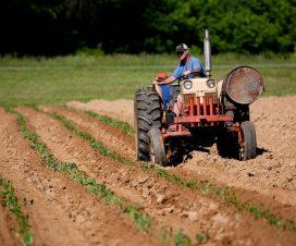 Side Hustles for People in Rural Areas